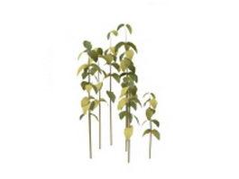 Bush plant 3d model preview