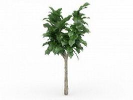 Cornstalk dracaena plant 3d model preview