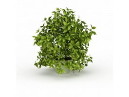 Potted evergreen tree 3d preview