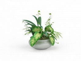 Potted dieffenbachia 3d preview