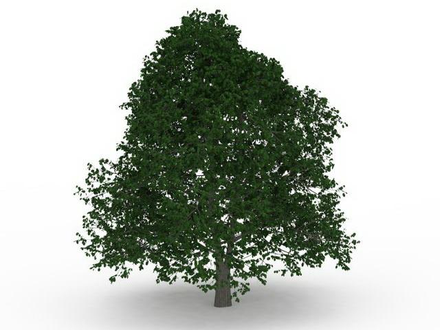 Leafy tree 3d rendering