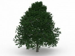 Growing shade tree 3d preview