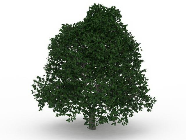 Growing shade tree 3d rendering