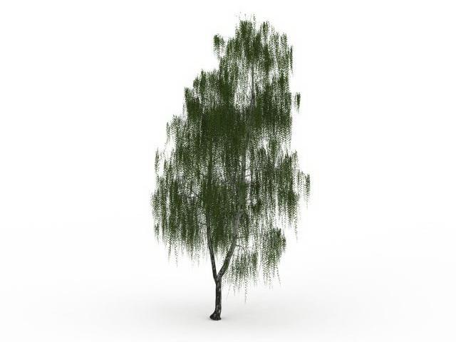 Drooping willow tree 3d rendering