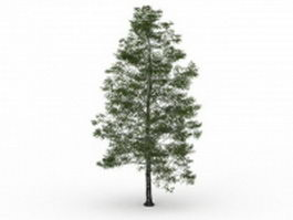 Birch tree 3d model preview