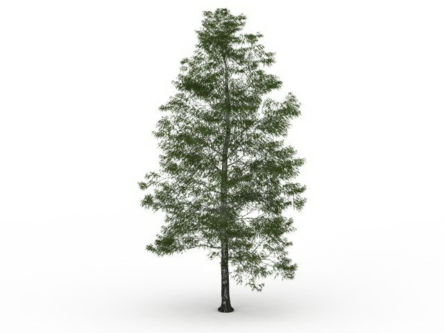 Birch tree 3d rendering