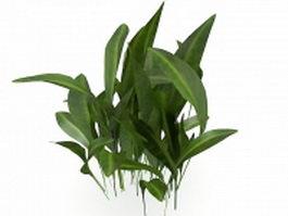 Broadleaf house plants 3d preview