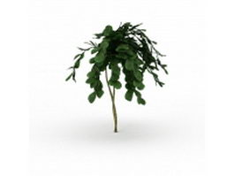 Landscaping small yard tree 3d model preview