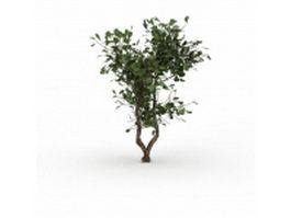 Evergreen huckleberry bush 3d model preview