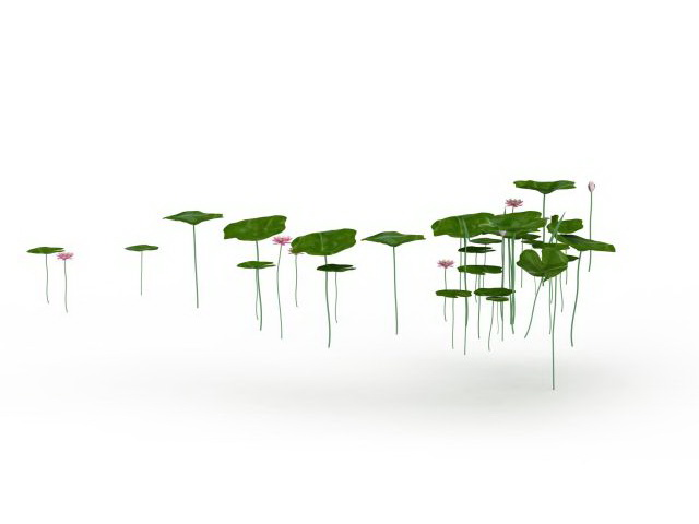 Lotus leaves and flowers 3d rendering