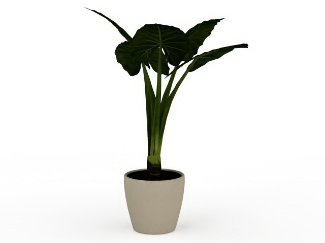 Elephant ear plant in container 3d rendering