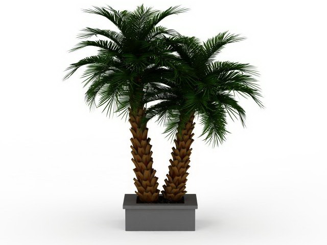 Outdoor potted palm plants 3d rendering