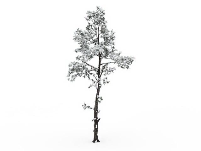 Snowy tree 3d rendering