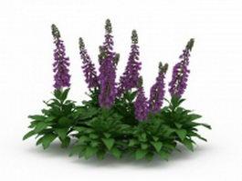 Salvia divinorum plants 3d model preview