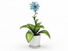 Potted dieffenbachia plant 3d preview