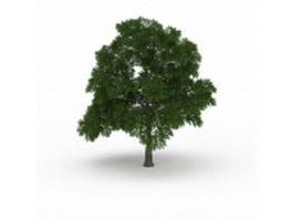 Sassafras tree 3d model preview