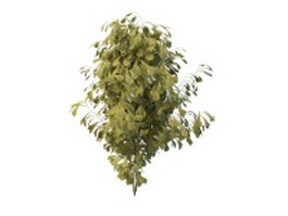 Ginkgo tree 3d model preview