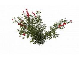 Rosa rugosa plant 3d preview