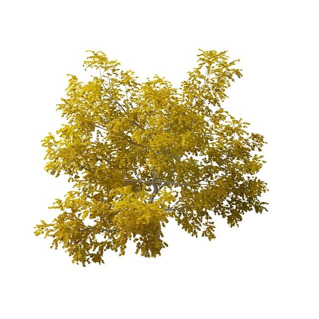 Beautiful yellow tree 3d rendering