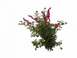 Rose plant 3d model preview