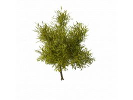 Shrub willow tree 3d model preview