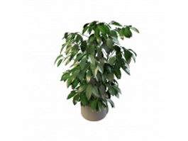 Evergreen pot plants 3d preview