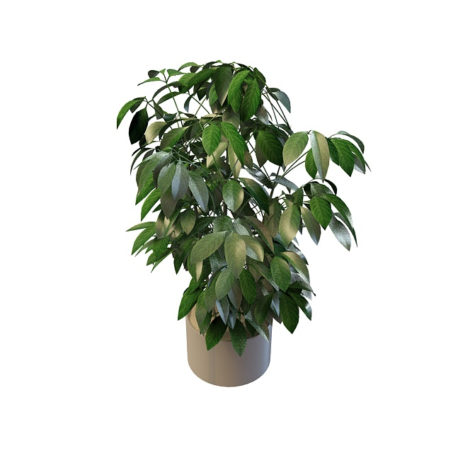 Evergreen pot plants 3d rendering