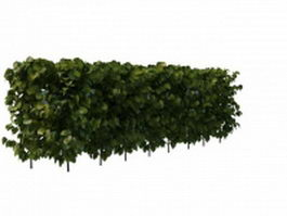 Evergreen privet hedge plant 3d preview