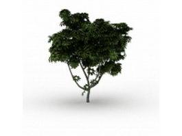 Black walnut tree 3d model preview