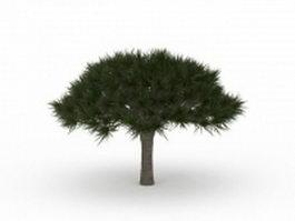Umbrella pine tree 3d model preview