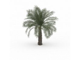 Pindo palm tree 3d model preview
