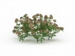 Flowering plant for garden 3d model preview