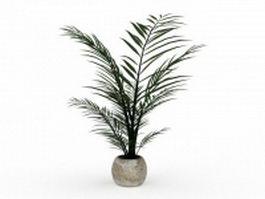 Areca palm fern plant 3d preview