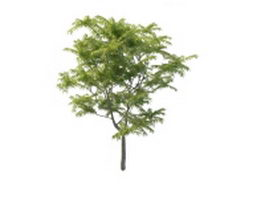 Toona tree 3d preview