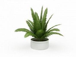 Boston fern house plant 3d model preview