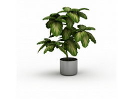 Variegated houseplant 3d model preview