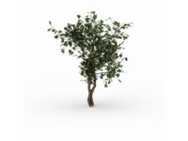 Dwarf tree for landscaping 3d model preview