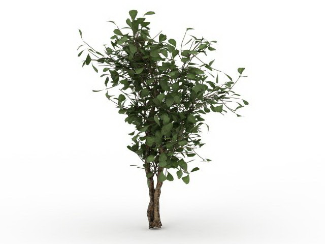 Dwarf tree for landscaping 3d rendering