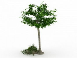Ornamental tree for landscaping 3d model preview