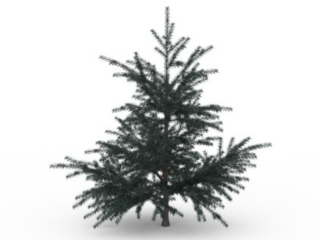 White fir tree 3d rendering
