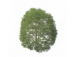 Topiary dwarf tree 3d preview
