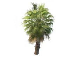 Washingtonia palm tree 3d preview