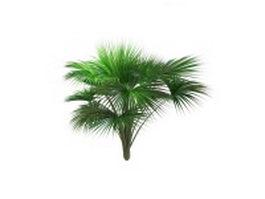Indian Ocean fan palm tree 3d model preview