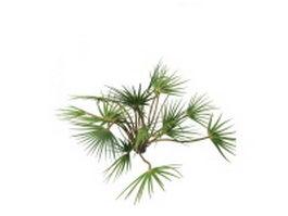 Ornamental palm plants 3d model preview
