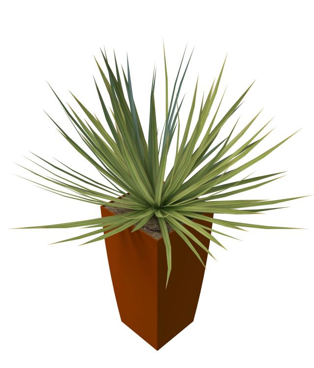 Potted grass plants 3d rendering