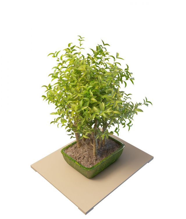 Potted camellia plant 3d rendering