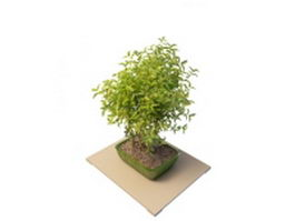 Potted camellia plant 3d preview