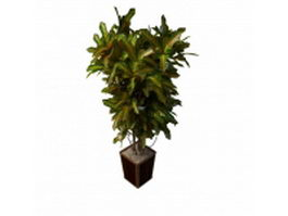 Variegated houseplants 3d model preview