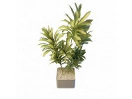 Long leaf indoor plants 3d model preview