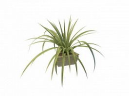 Grass-like indoor plants 3d preview